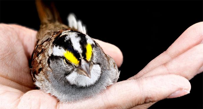 Bird in Hand Prinzip, Quelle: u-institut